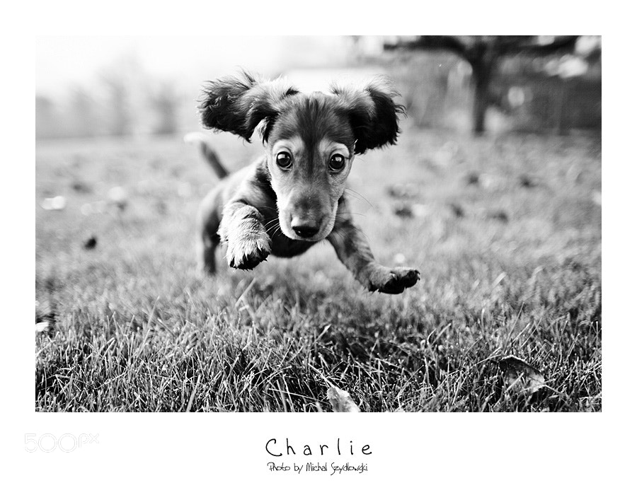 Photograph Charlie by Michal Szydlowski on 500px
