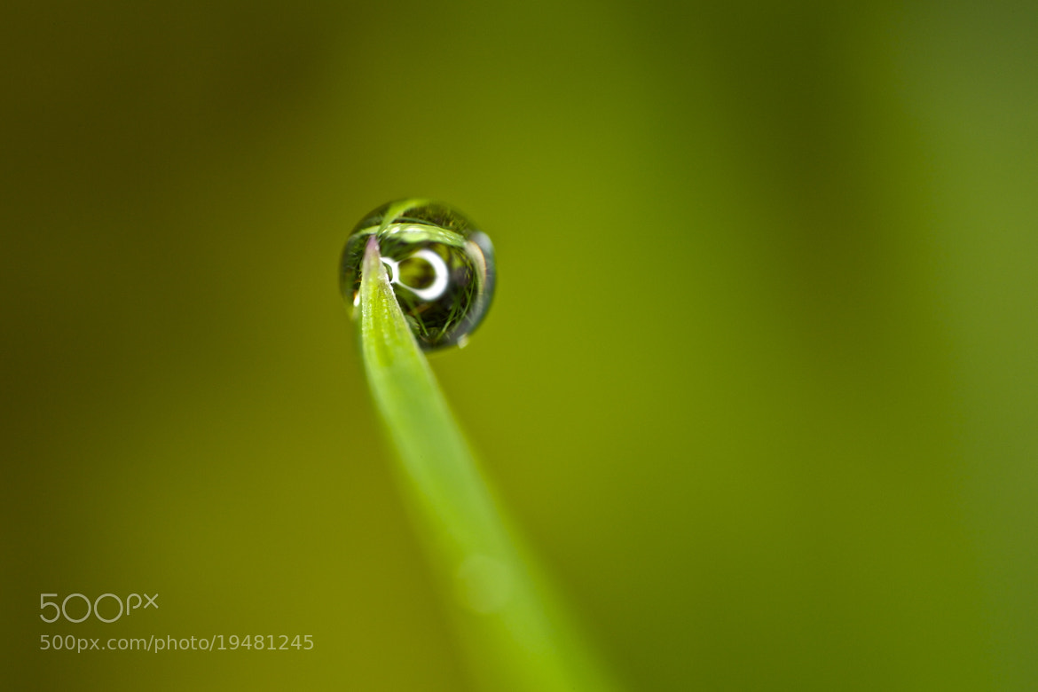 Photograph 5∞ px in one drop by Claudio Stefanini on 500px