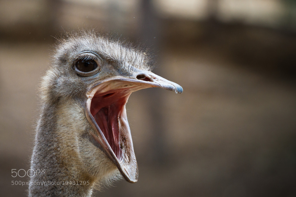 Photograph Scream by Angelo  on 500px