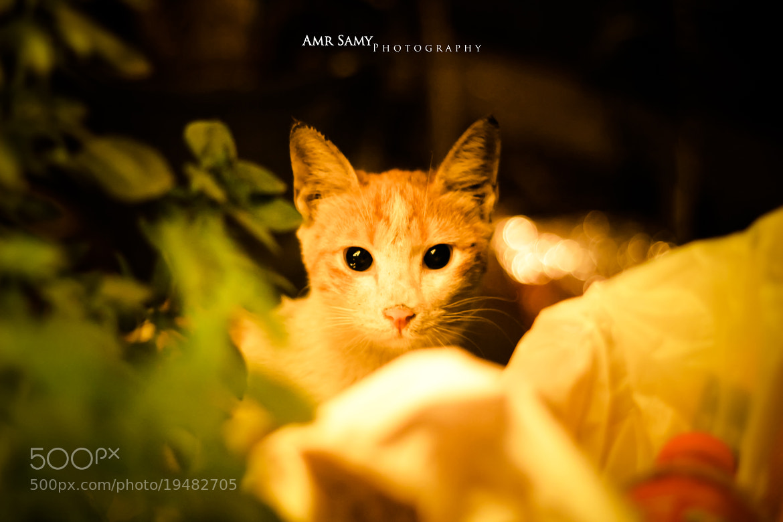 Photograph Innocence  by Amr  Samy on 500px