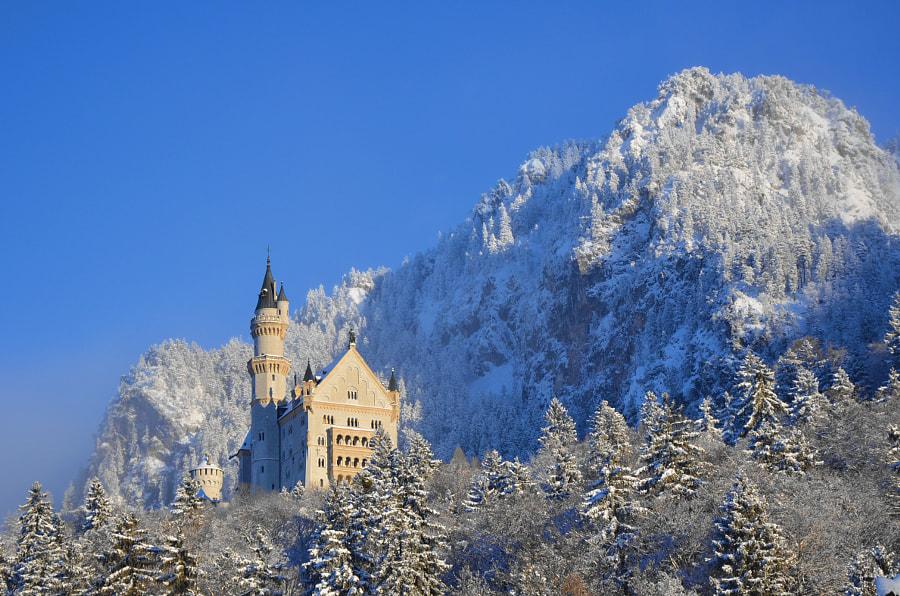 Castle Neuschwanstein in winter, автор — Yvonne Albe на 500px.com
