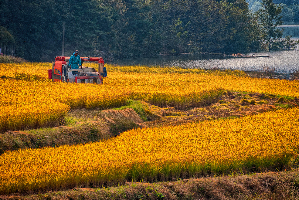 Photograph #.harvest by LEE GEON on 500px
