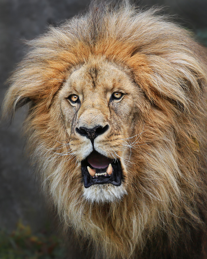 Photograph Born to be wild by Klaus Wiese on 500px