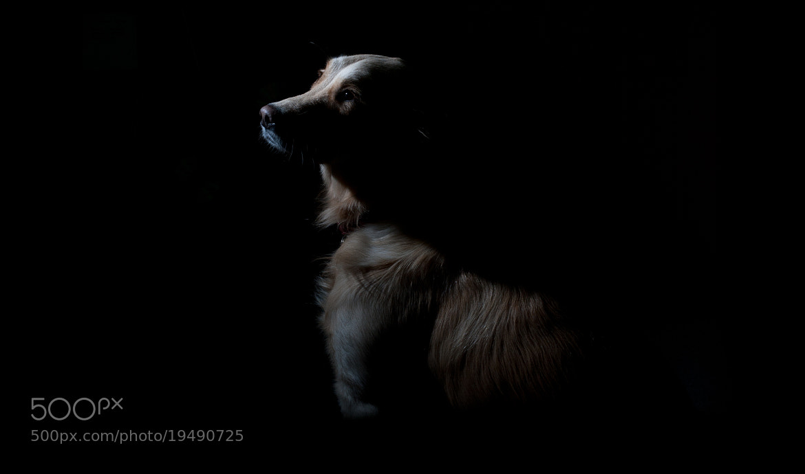 Photograph Waffle the dog by robert glemas on 500px