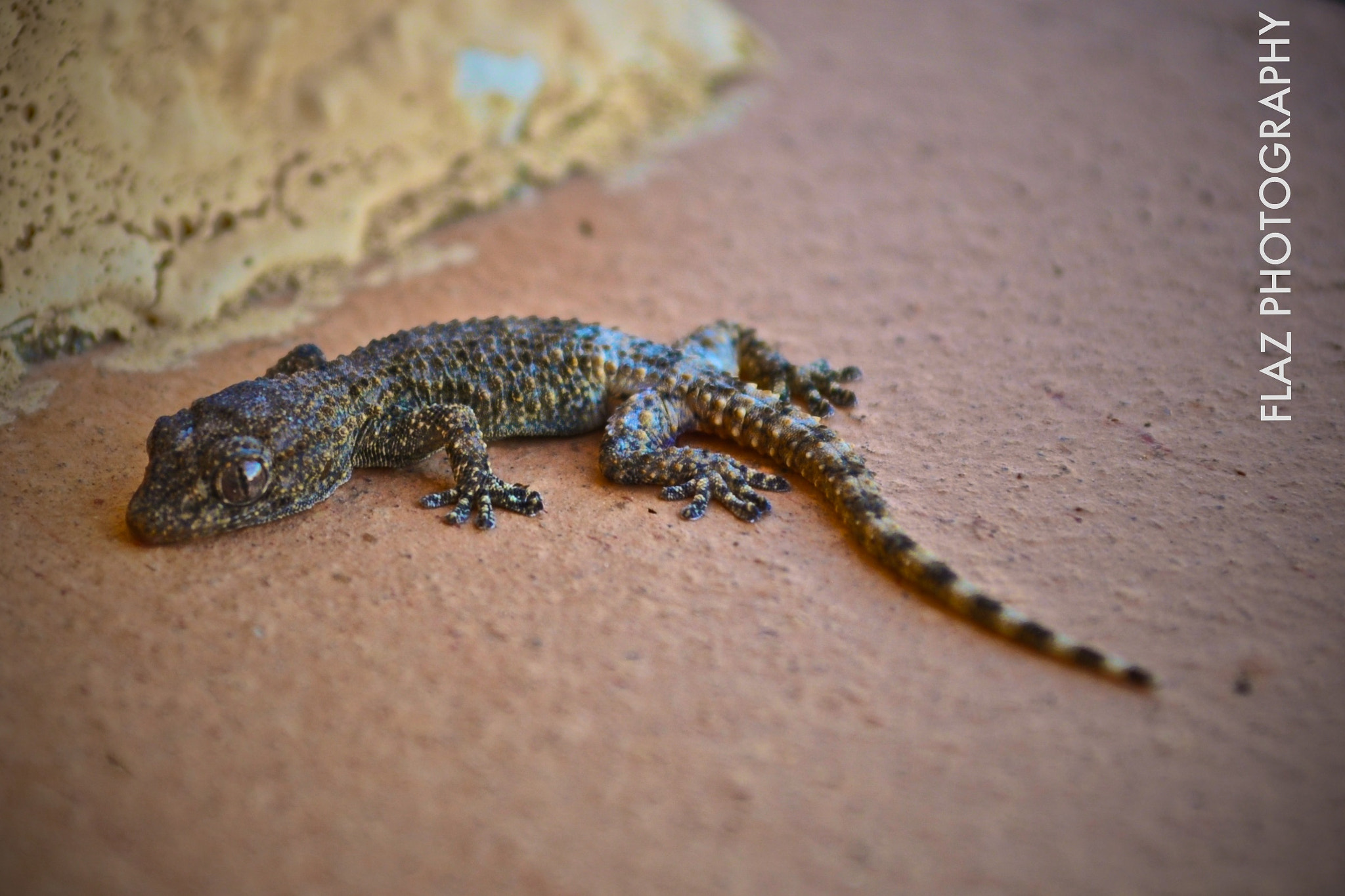 Photograph The look of the little salamander by Florencia  on 500px