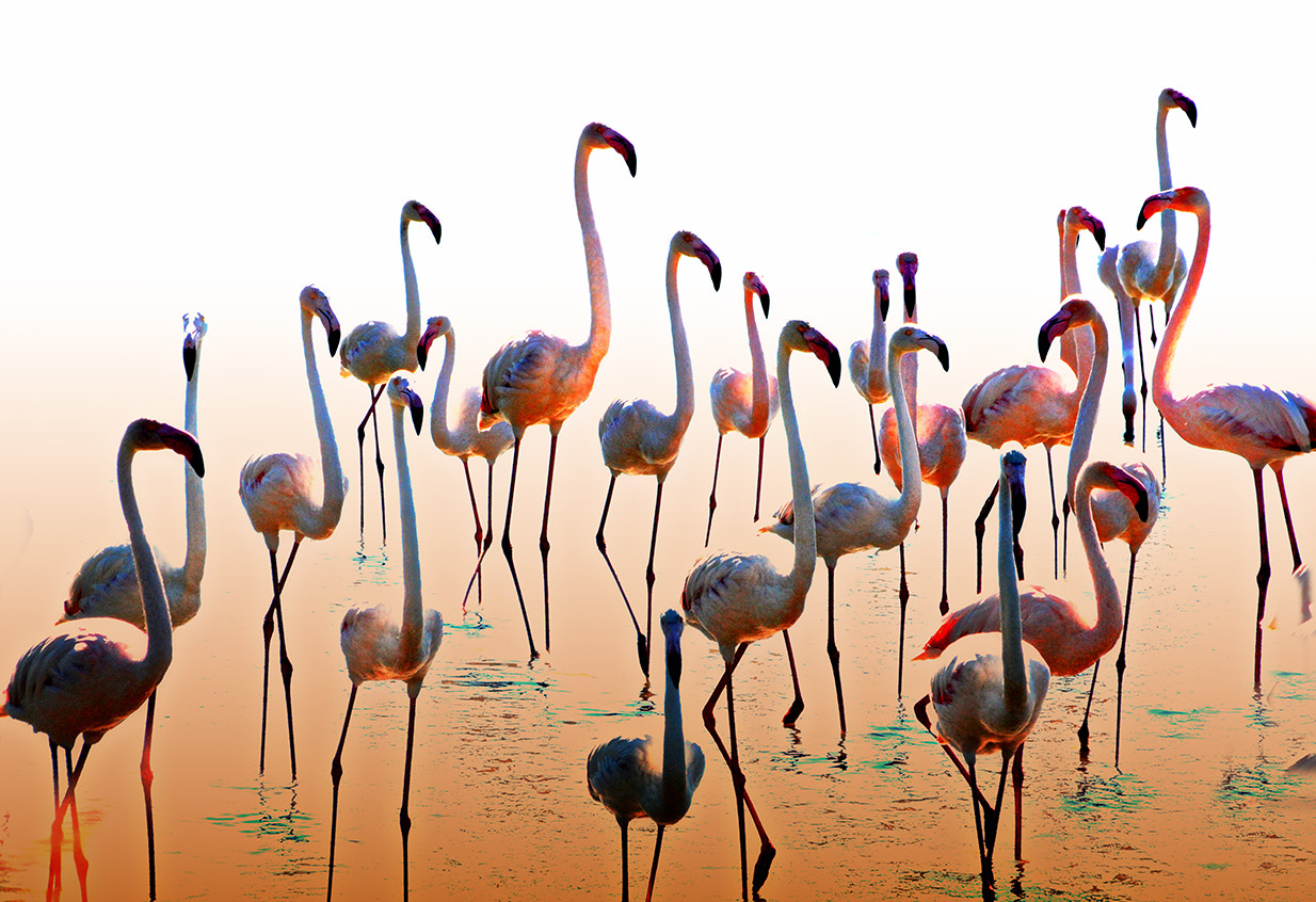 Photograph In Camargue by Roberto Paglianti on 500px