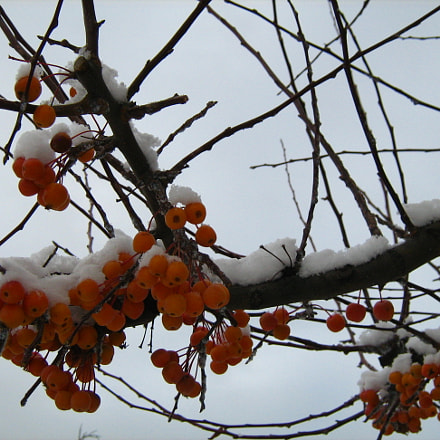 Frozen fruits, Canon POWERSHOT A450
