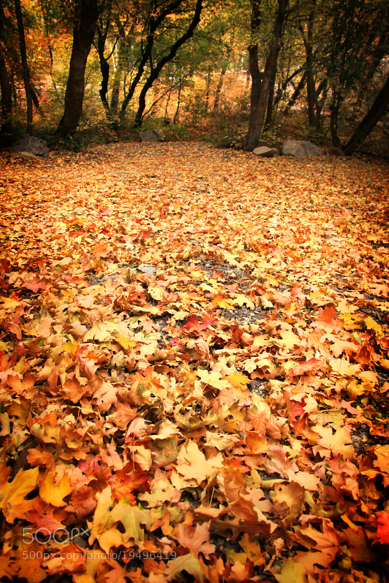 Photograph Carpet of Leaves by Laura Bellamy on 500px