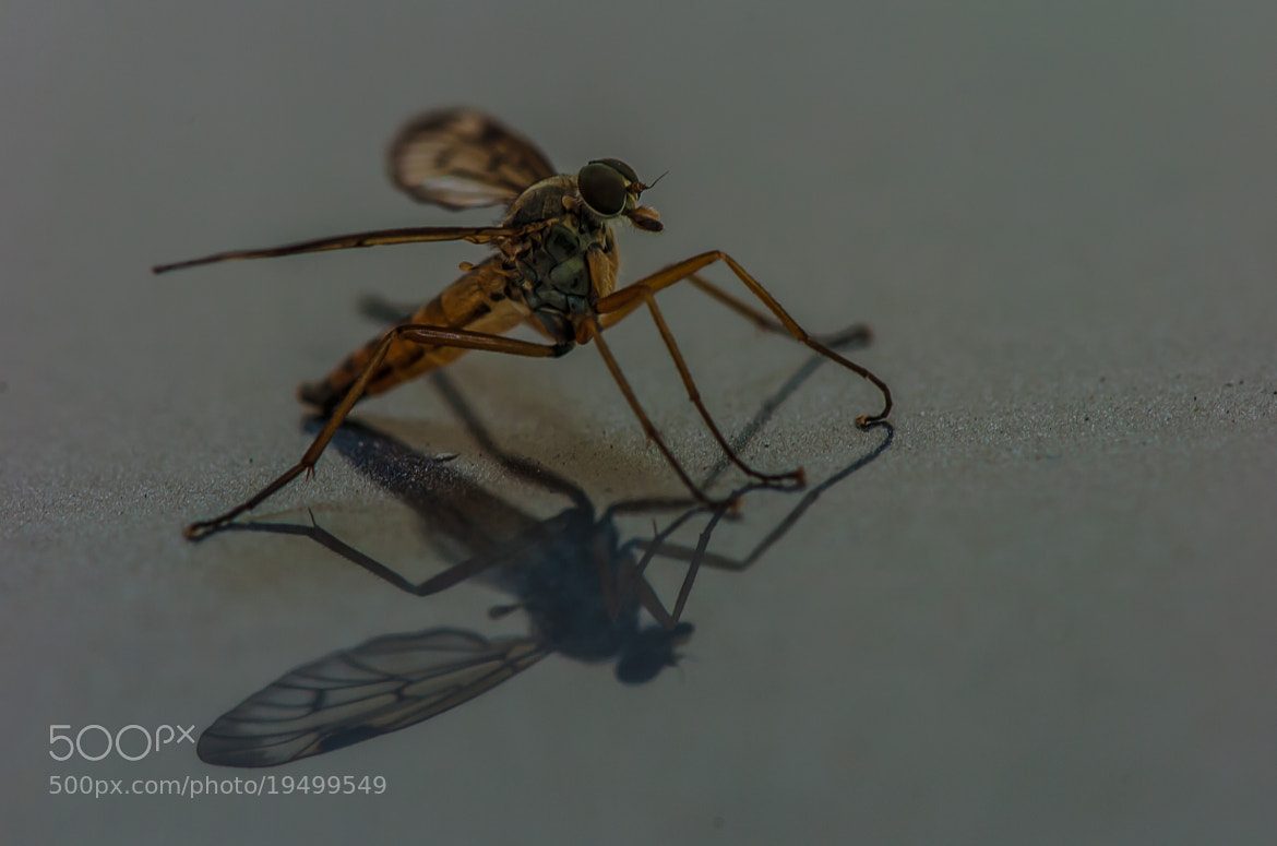 Photograph Insect by jorgen norgaard on 500px