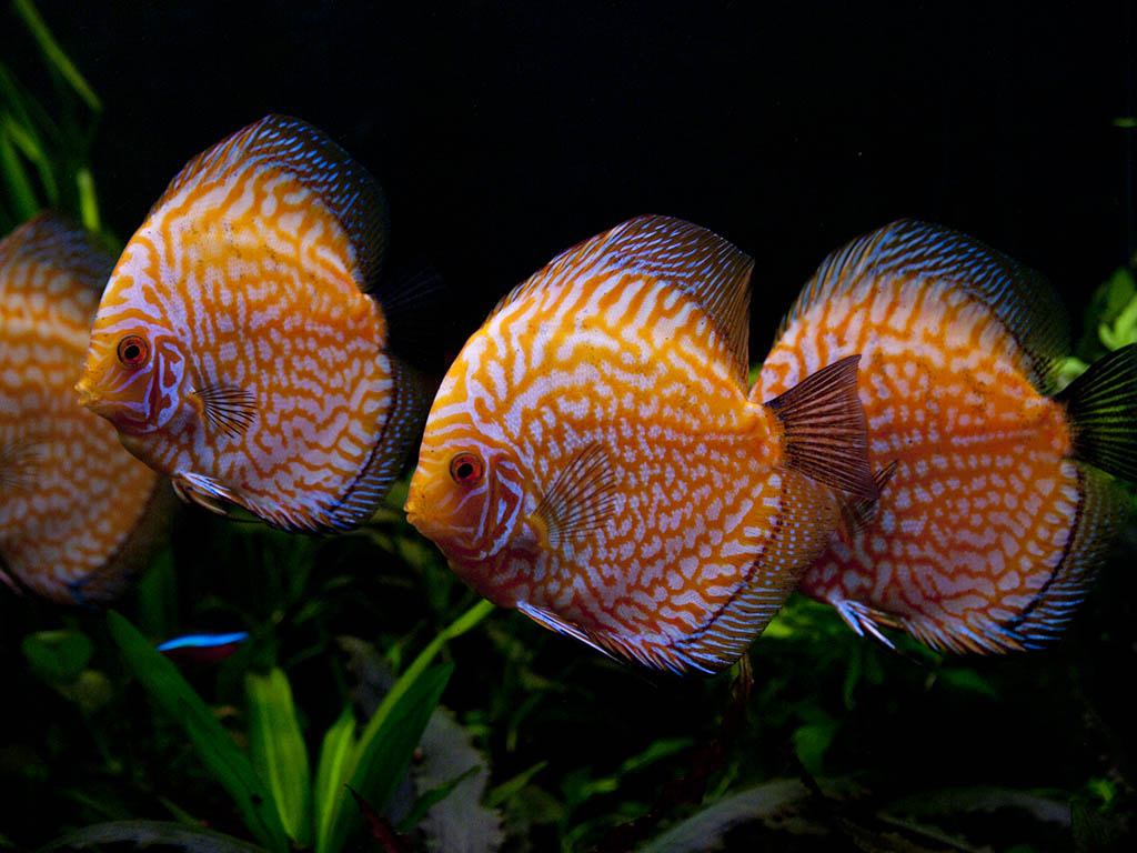 Photograph Discus by Johnn Doe on 500px