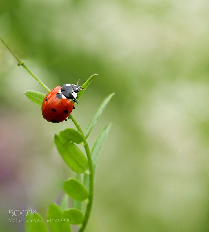 Photograph Red on green by Mario Brouard on 500px