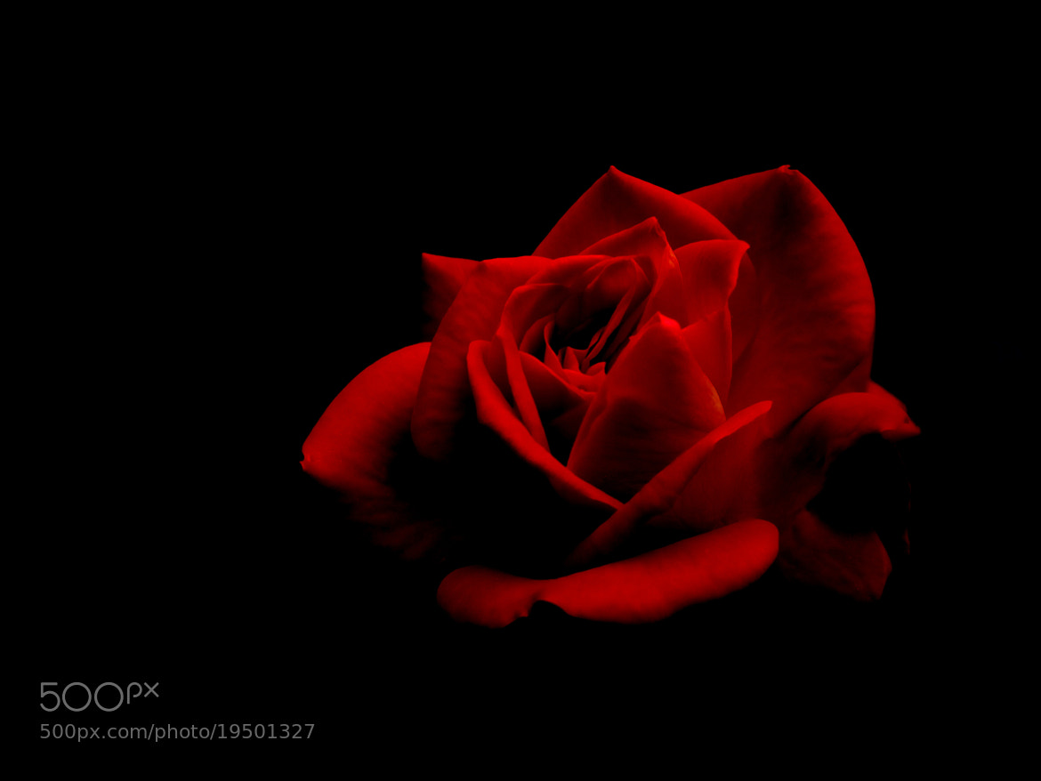 Photograph Dark Passion by Bibin Antony on 500px