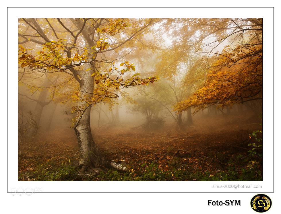 """Photograph Sirius-""""Rincón de otoño en Roc Colom 2012"""" by FOTO SYM www.sonymage.es on 500px"""