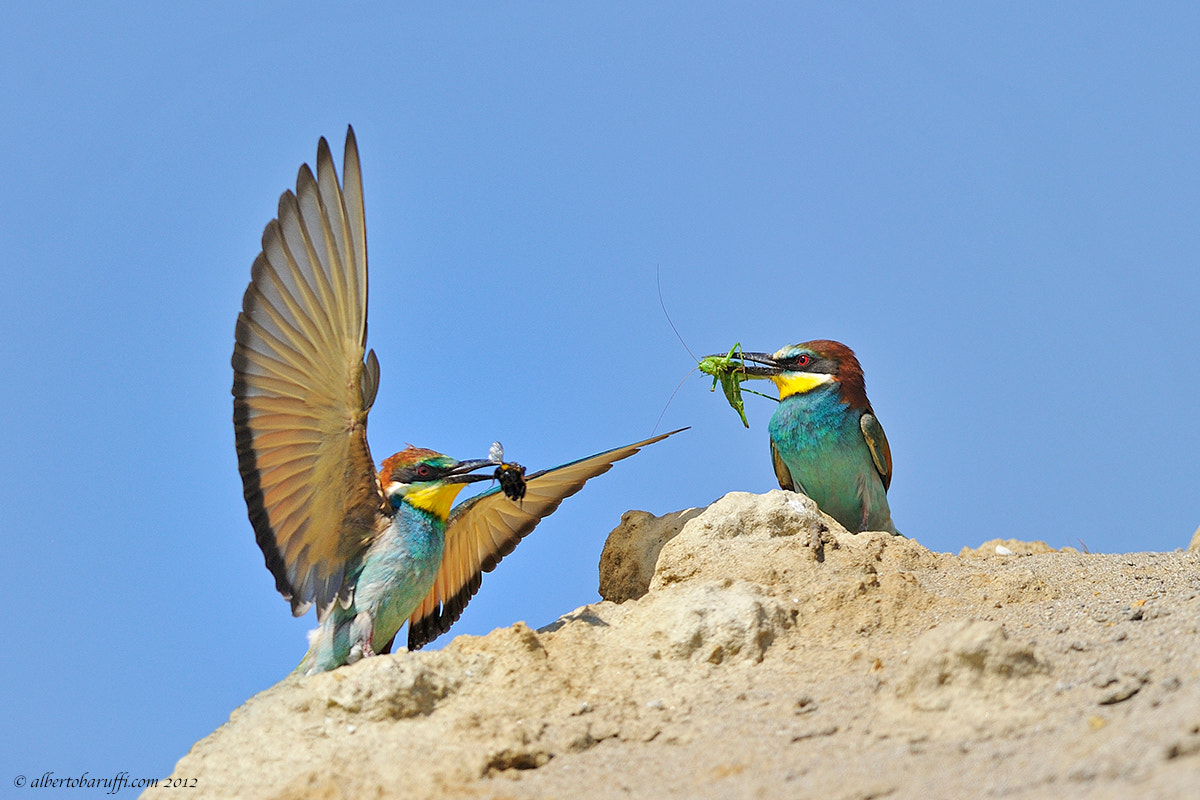 Photograph Double catch by Alberto Baruffi on 500px