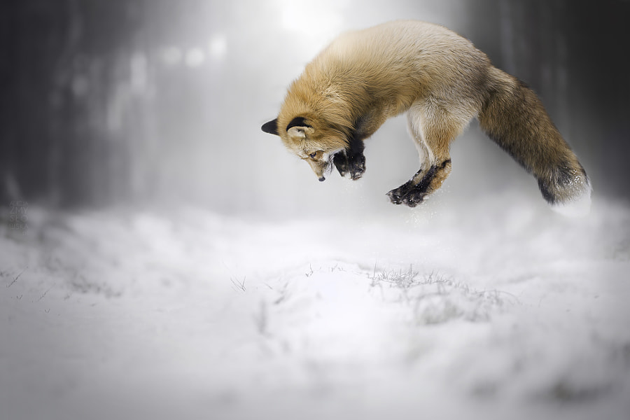 Hunt by Alicja Zmys?owska on 500px.com