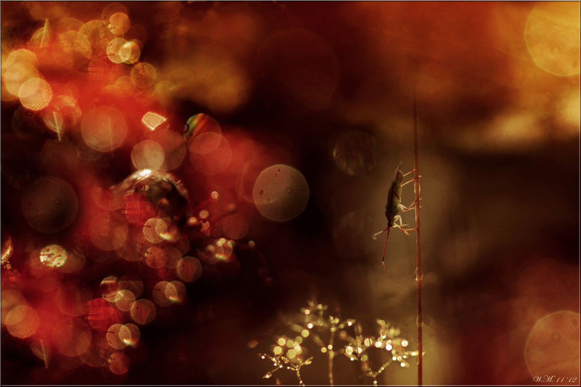 Photograph Bug in Christmas-mood by Wil Mijer on 500px