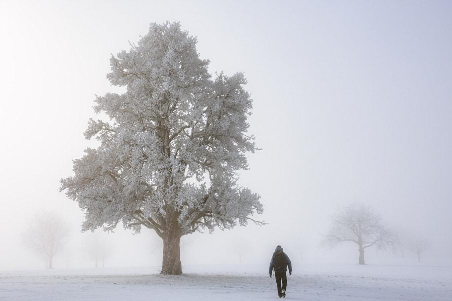 Pear Tree Walk