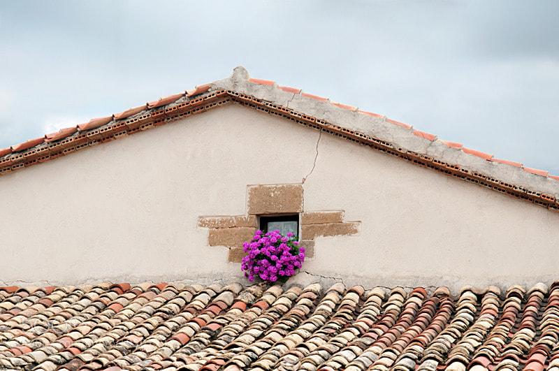 Camino de Santiago 2012  Pamplona - Obanos III  _____________________________   Tejado con flores