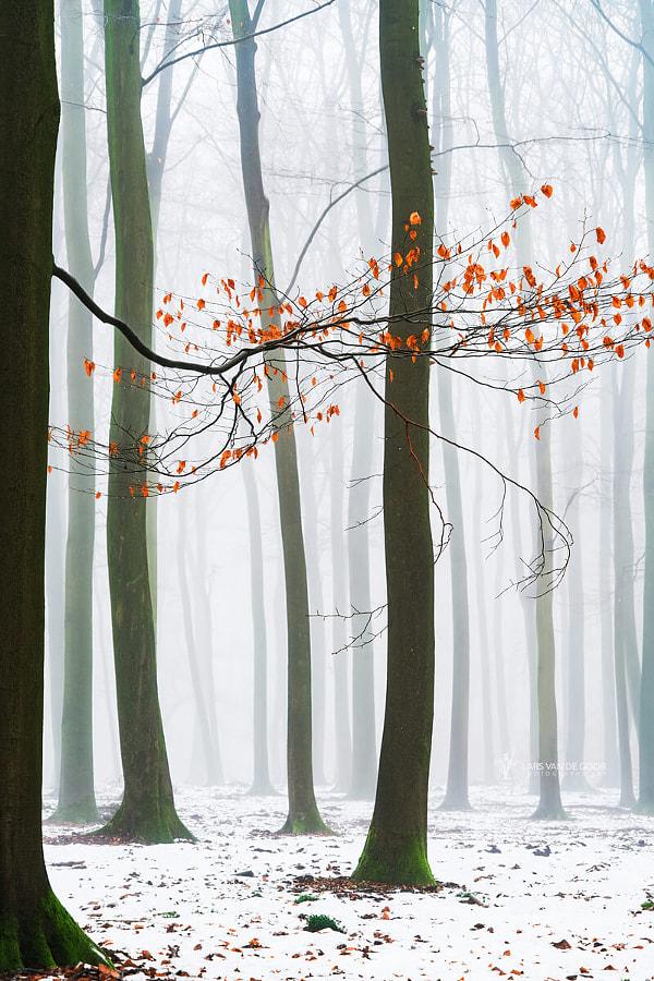 Winter Colors 5