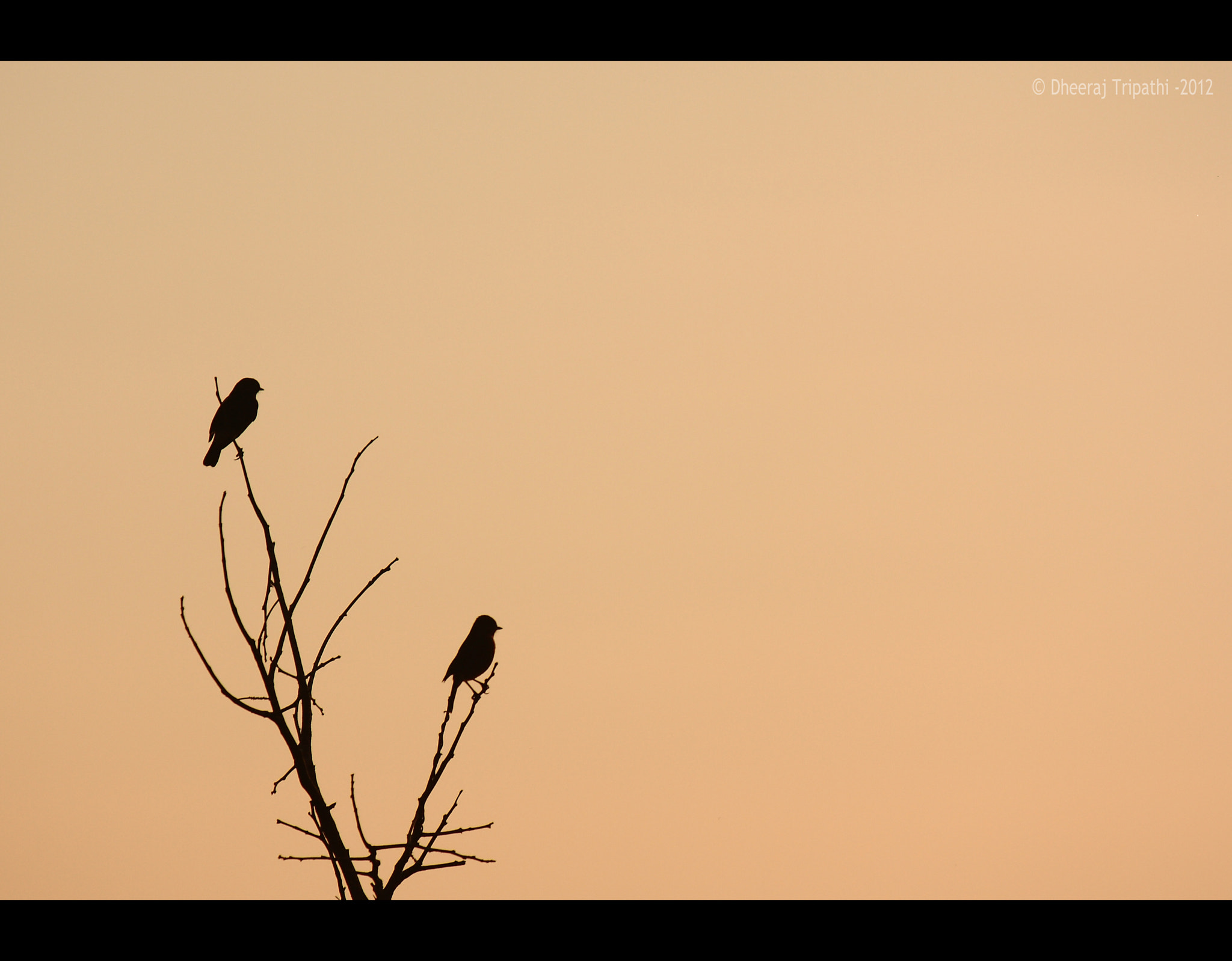 Photograph Untitled!! by Dheeraj Tripathi on 500px