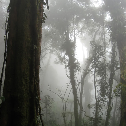 cloud forest, Canon POWERSHOT SD700 IS