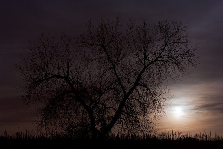 Photograph .: Silhouette in Moonlight :. by Jon Rista on 500px