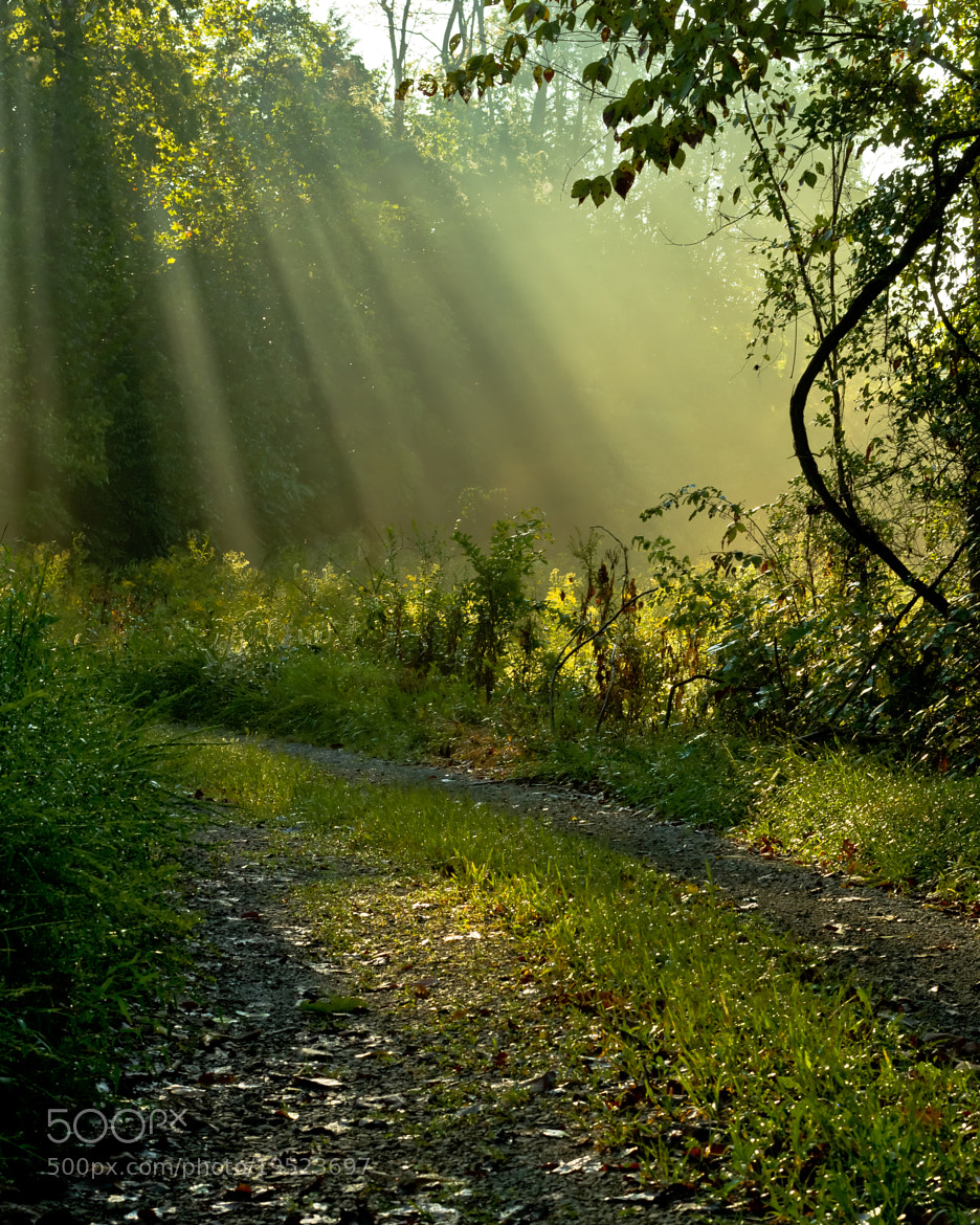 Photograph Shower of Light by Lori Coleman on 500px
