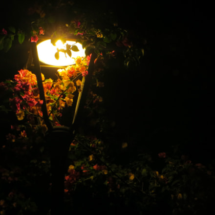 Flower post, Canon IXUS 500 HS