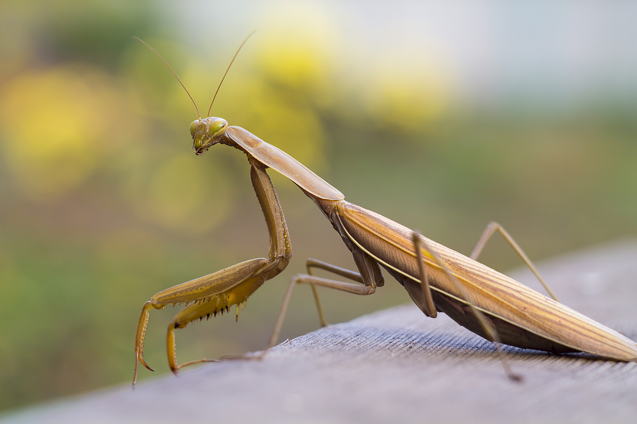 Photograph Mantes =) by Владимир Нестерук on 500px