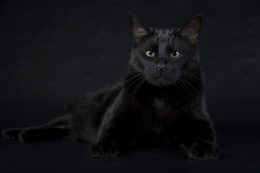 My Black Cat by Elizabeth  E. on 500px.com