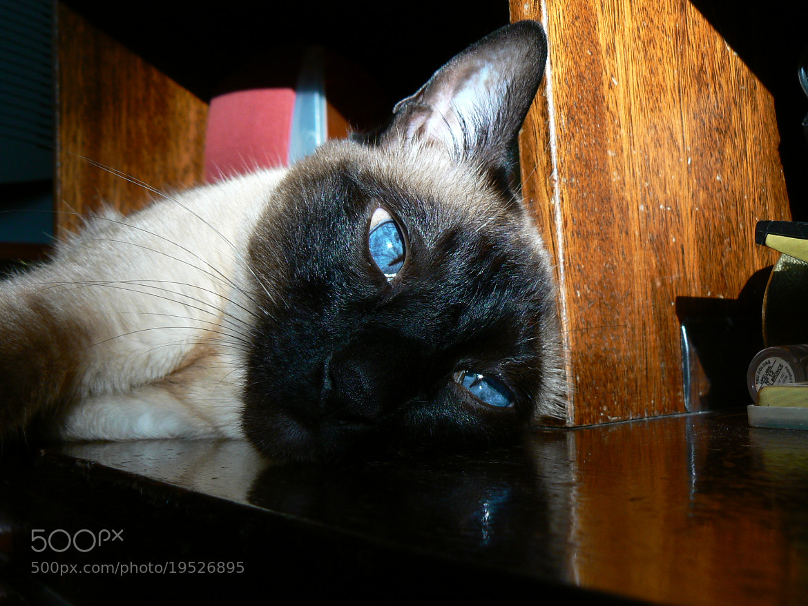 Photograph That tired gaze by Jose  Ferreyra on 500px