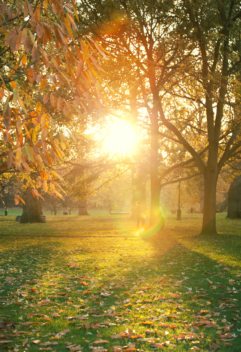 Photograph Autumn in Green Park by Magdalena Jessica Krynicka on 500px