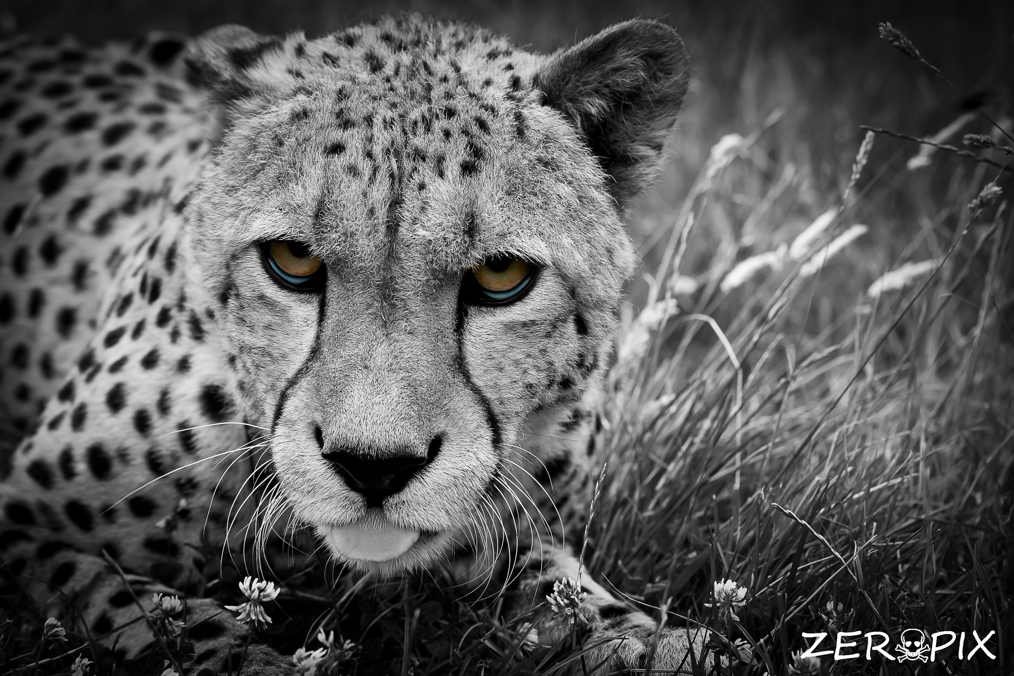 Photograph Dont poke your tounge out at me by ZeroPix Photography on 500px