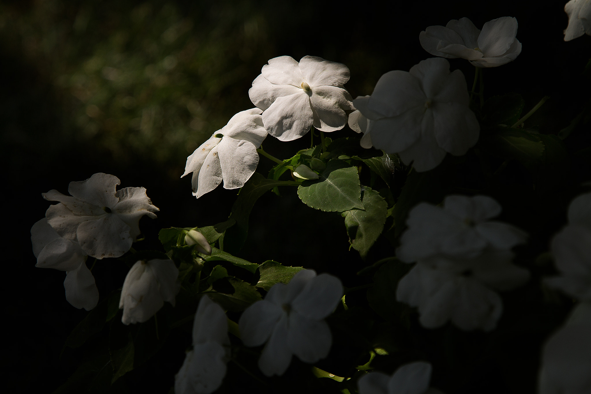 Photograph flowers and shadows by Scott Brodersen on 500px