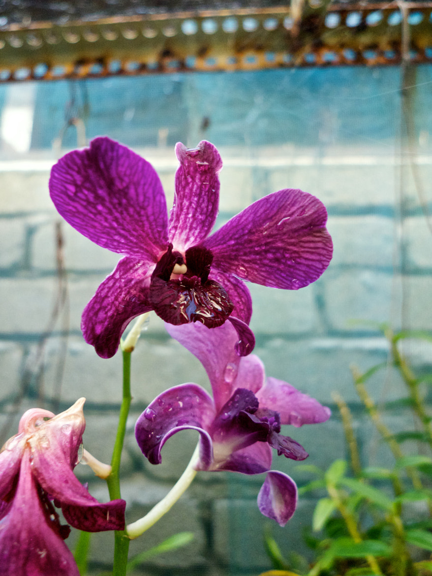 Photograph Orchid by Jinny Wong on 500px