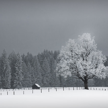 Rime - cold times in the bavarian alps