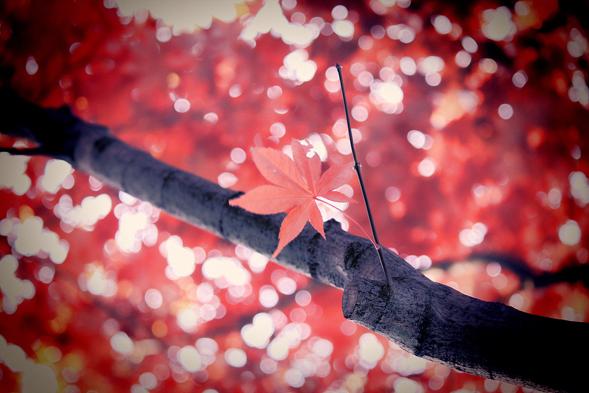 Photograph The last leaf by TY Kim on 500px