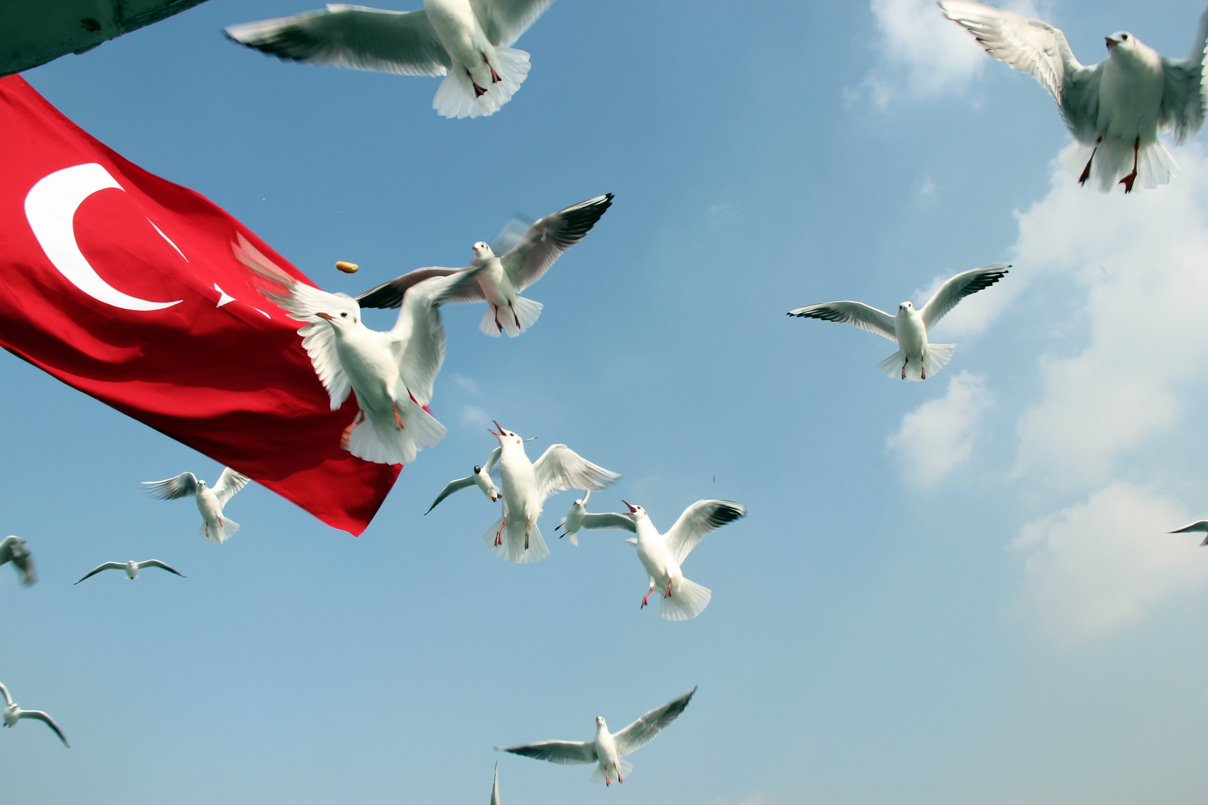 Photograph Seagull catching foods in the sky by Pasiban ISMAIL on 500px