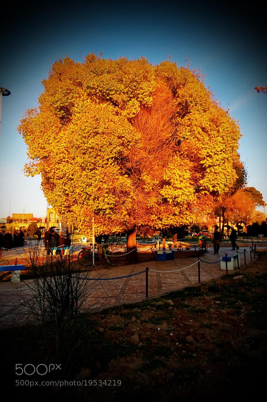 Photograph autumn.... by a_ sharifzade on 500px