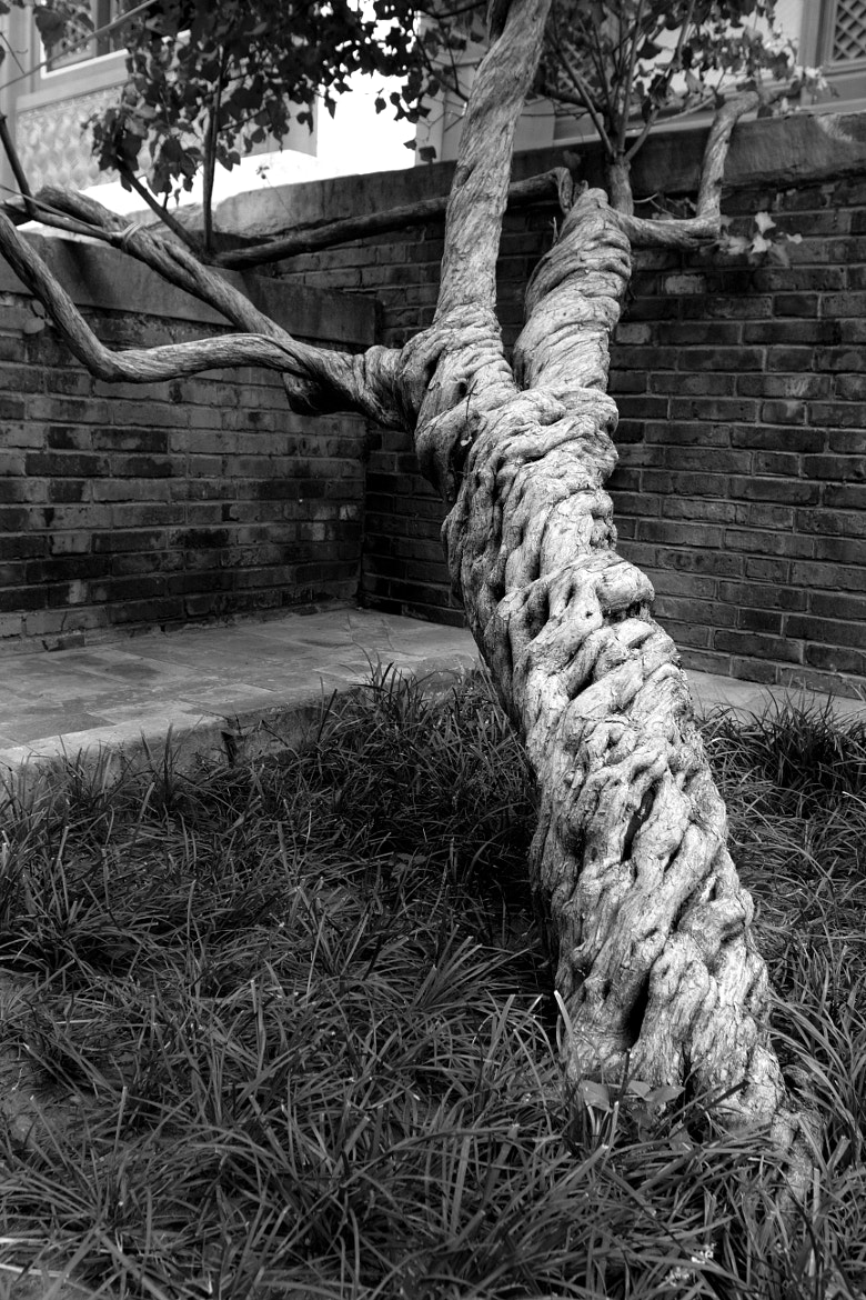 Photograph Twisted by Ken Forde on 500px