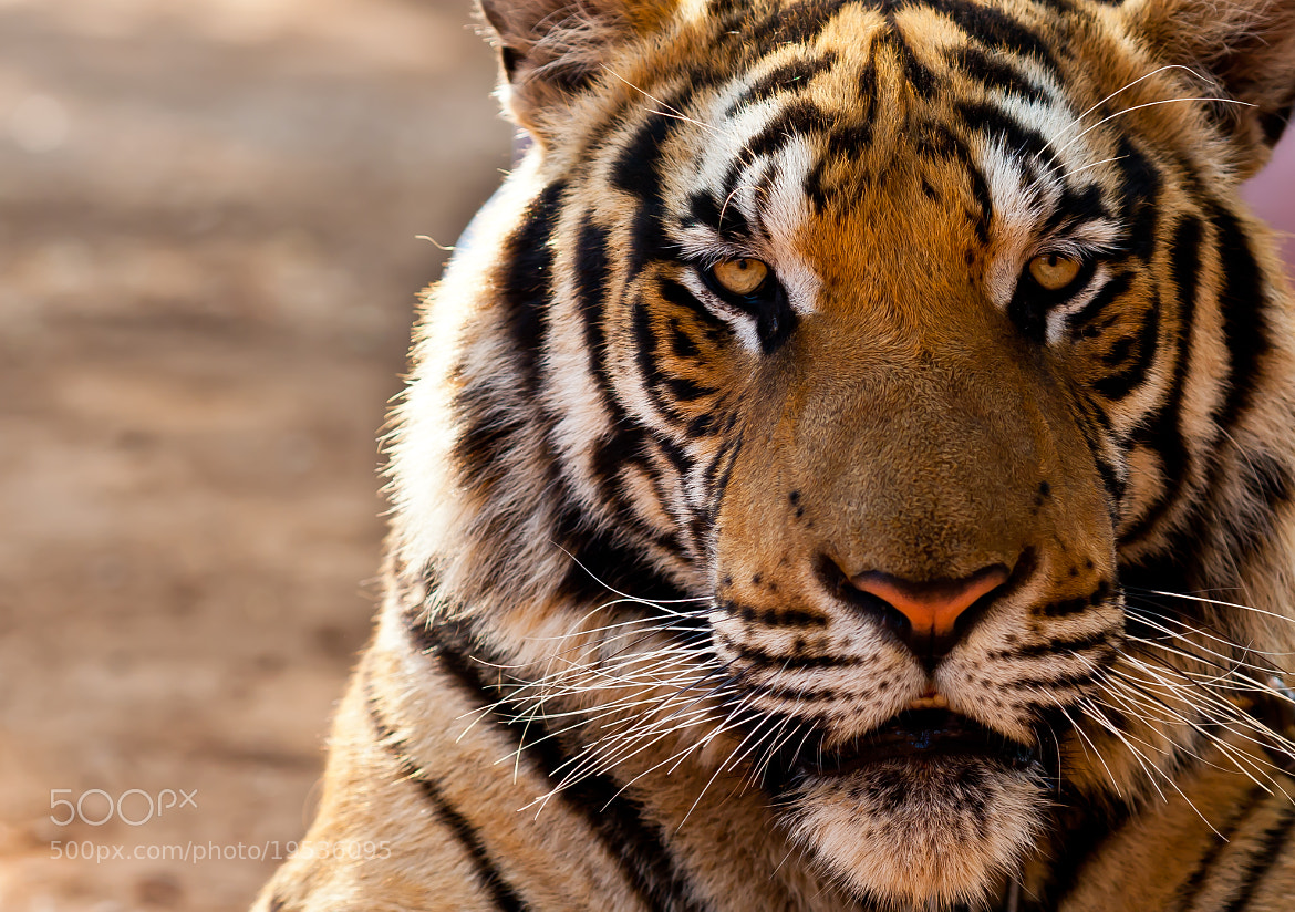 Photograph Primal by Ken Forde on 500px