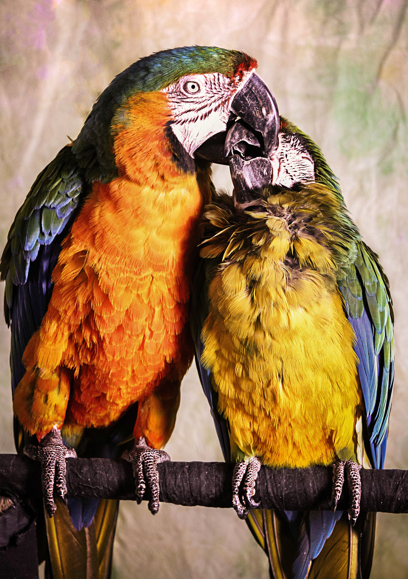 Photograph Kissy! Kissy! by Ivair Resendes on 500px