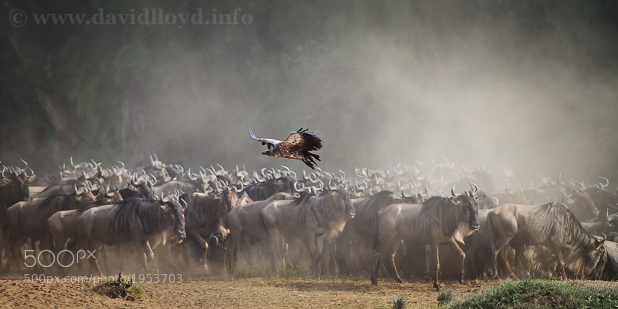 Photograph Mara River Flyby II by David Lloyd on 500px