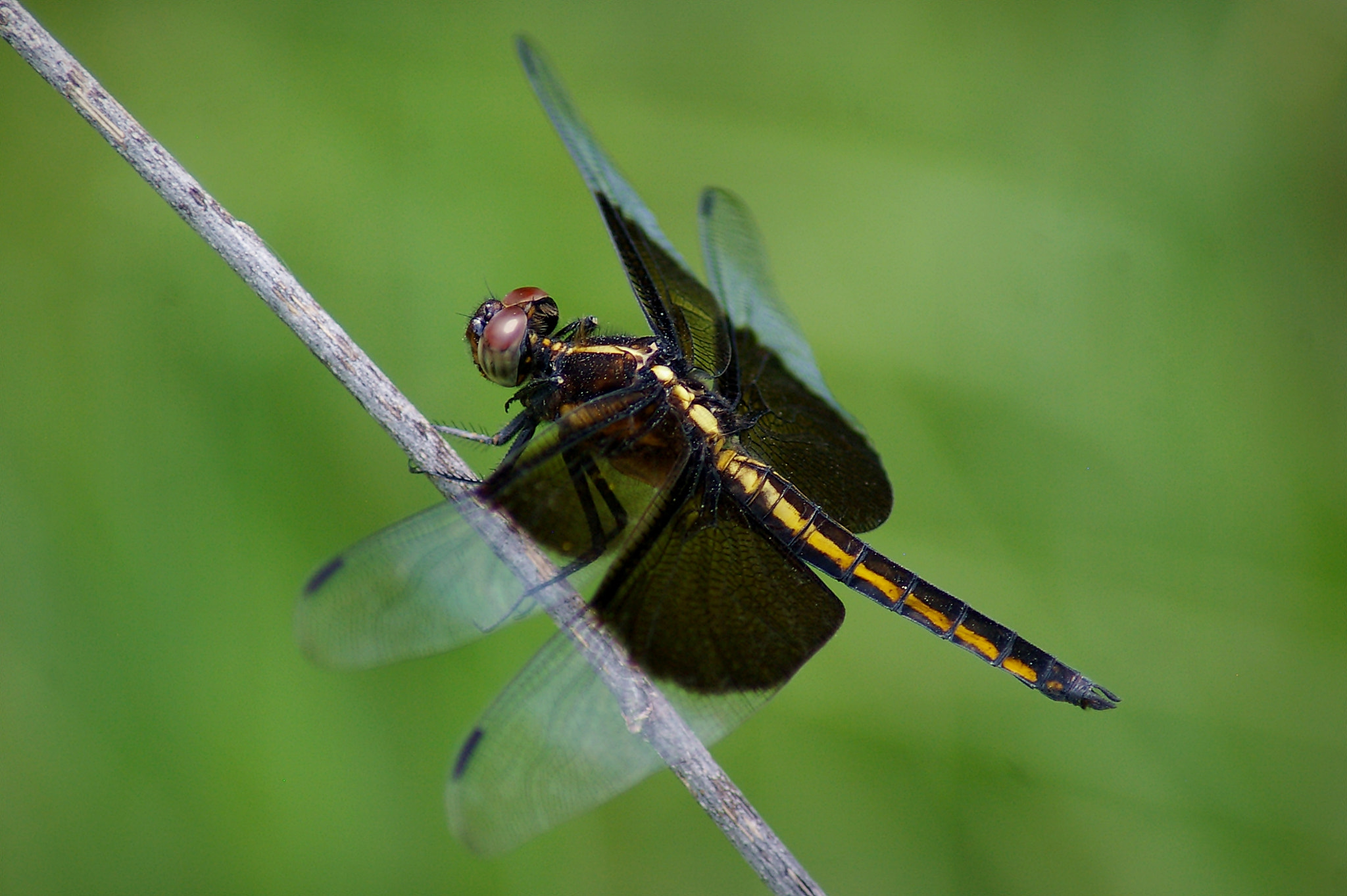 Photograph Dragonfly by Kayleigh Wilson on 500px
