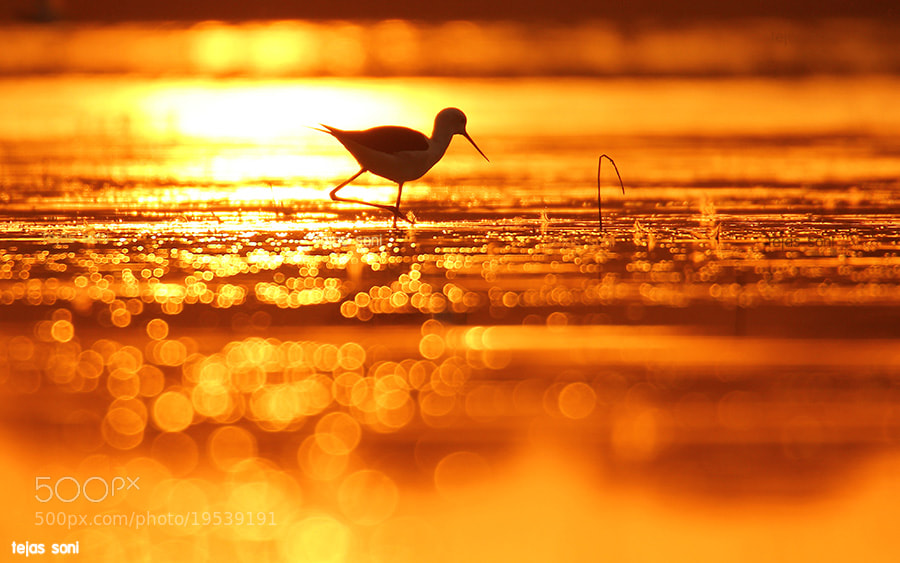 "Photograph ""The golden moment"" by Tejas Soni on 500px"