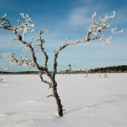Frozen tree, Nikon D1