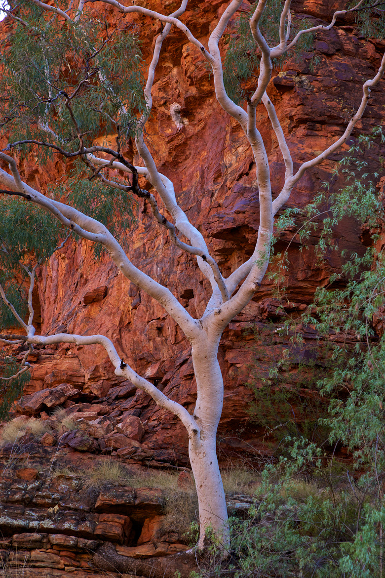Photograph Australias red center #2 by Nikolaj Thenagels on 500px