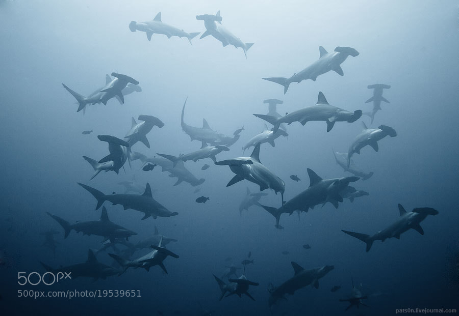 Photograph swarming by Alexander Safonov on 500px