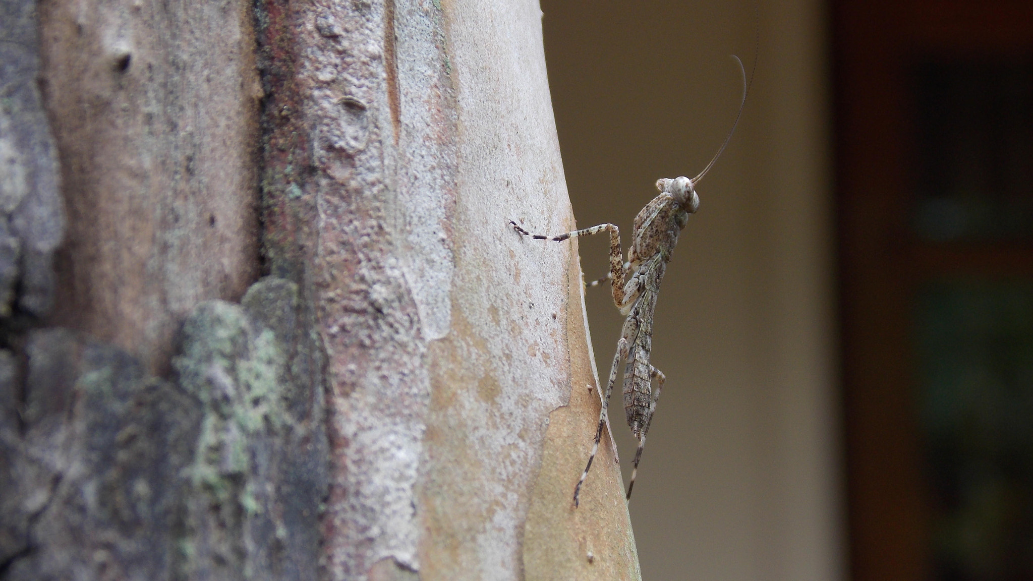 Photograph Mantis by Ajaz Hameed on 500px