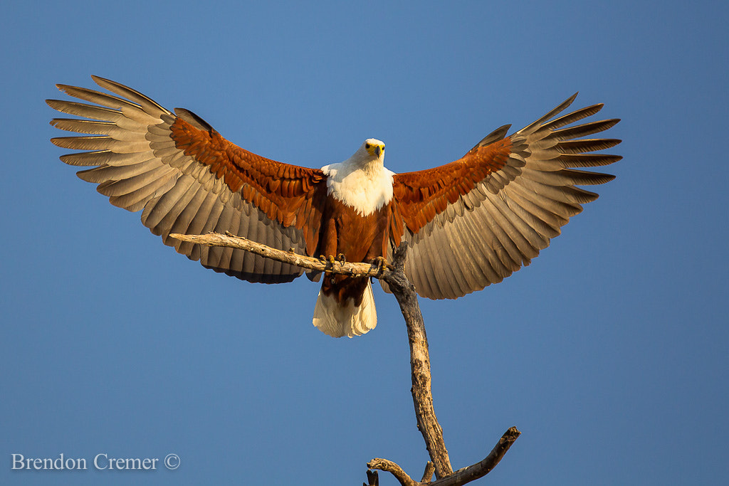 Photograph Angel Wings by Brendon Cremer on 500px